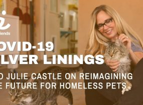 Reimagining the role of animal shelters and communities to support people with pets and save at-risk pets