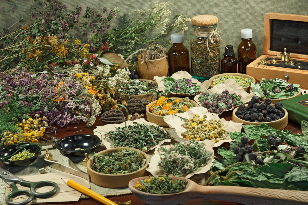 A Guide to Herbal Healing in the Modern World