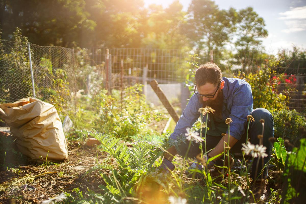 How to Cultivate a Gratitude Garden